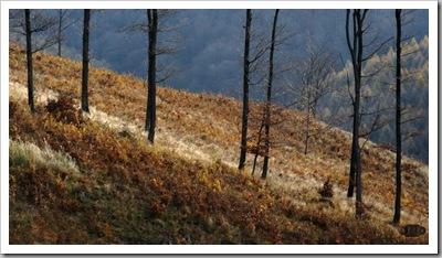 Egres oldal - Mátrakeresztes, Mátra-hg.2010. november 5.