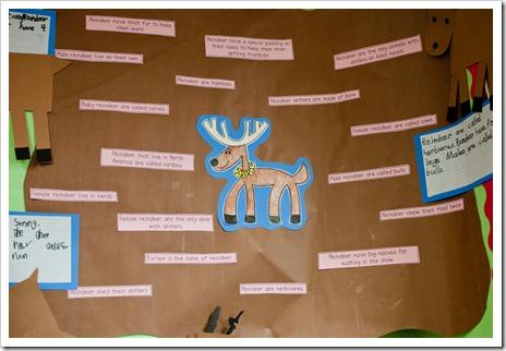 reindeer2