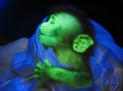 glowing-monkey