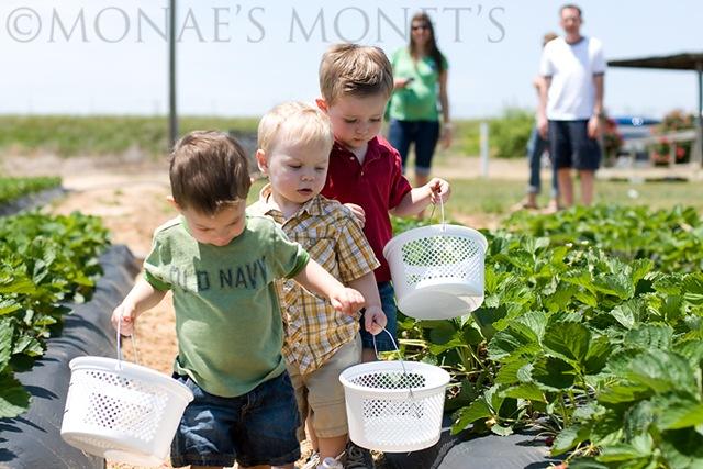 Little boys picking blog 2