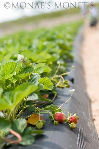 Strawberry mounds blog