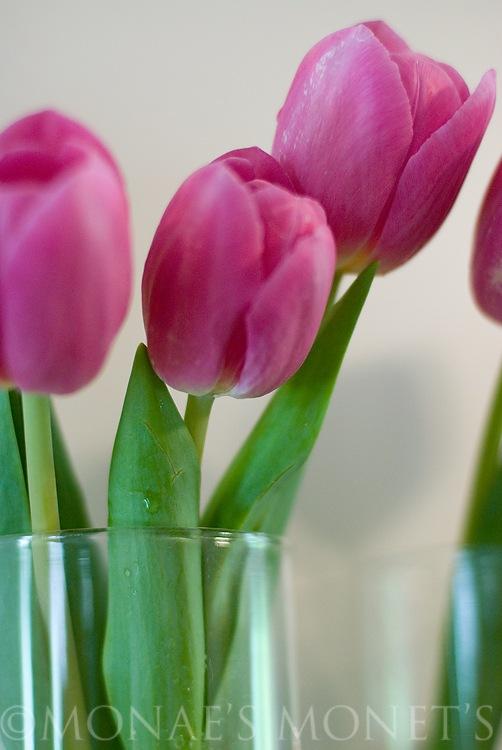 Tulips in vase 1