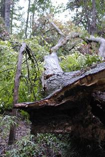 tree base blog