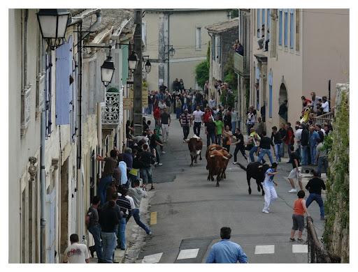"""bous al carrer"" P1190974"