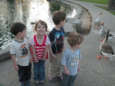 ducks n geese