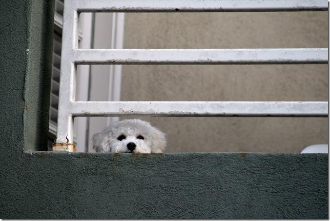 scruffydog