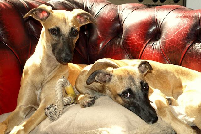 Izzie & Bisou