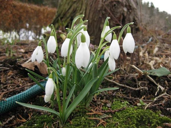 2010-03-28 Hagen på Møll (5)