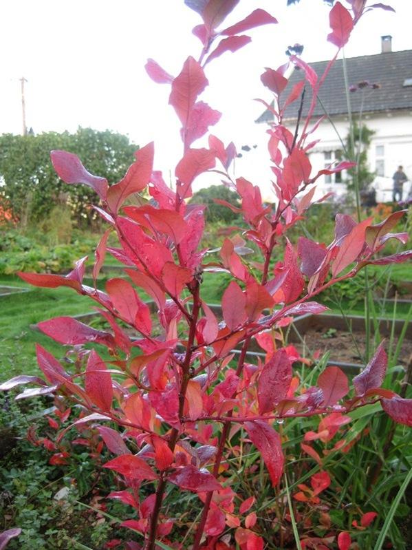 2008-10-19 I hagen (7)