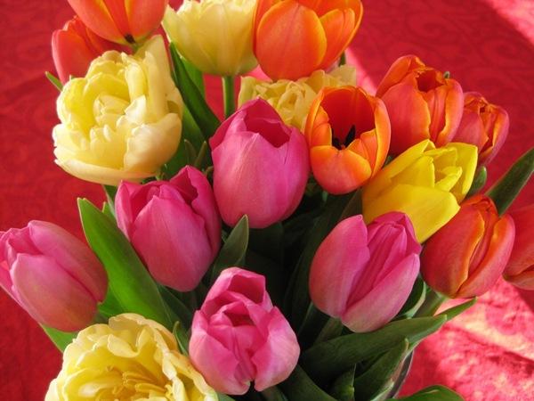 2009-03-11 Blomster i leiligheten (30)