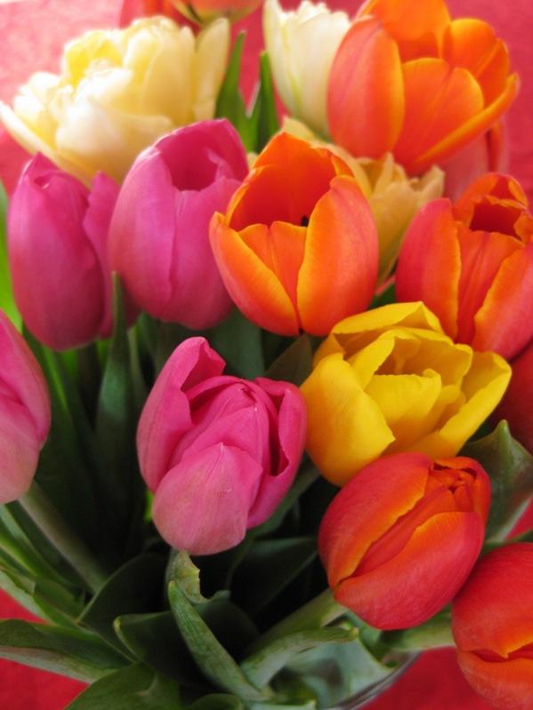 2009-03-11 Blomster i leiligheten (38)