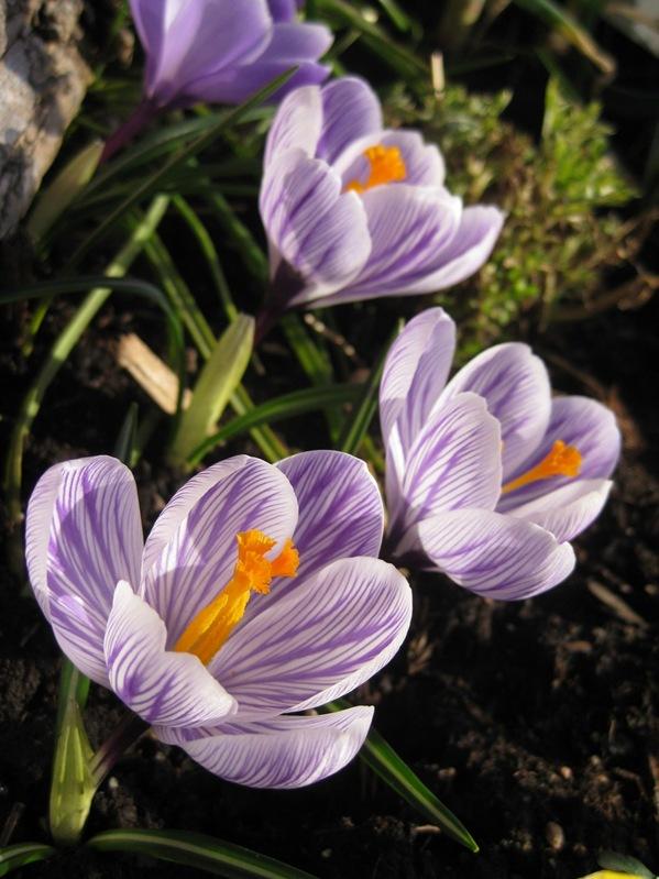 2009-03-17 Verandakassa (1)