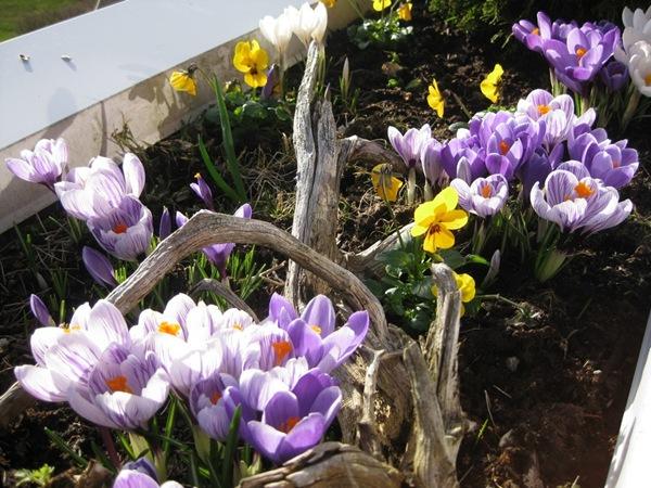 2009-03-17 Verandakassa (4)
