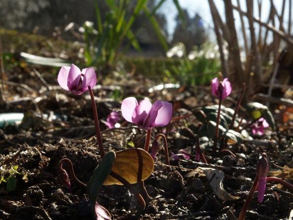 2009-03-21 Mars (3)
