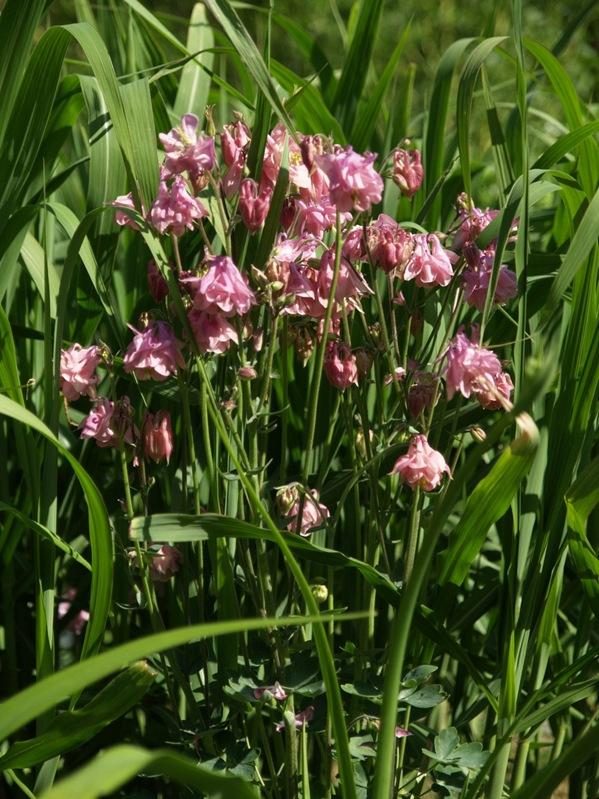 2010-06-06 Hagen i juni (38)