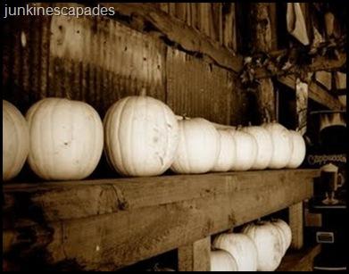 white pumpkins sepia