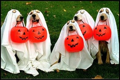 halloween_pets_01