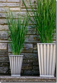 103-grasses18