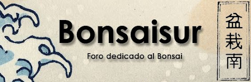 "Diseño del logo ""bonsaisur"" Bonsaisur2"