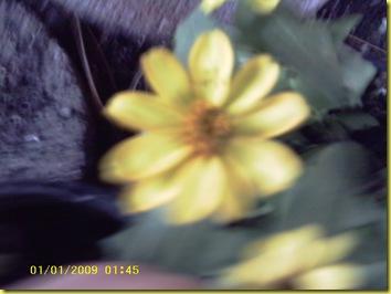 Shashamane's Pics 032