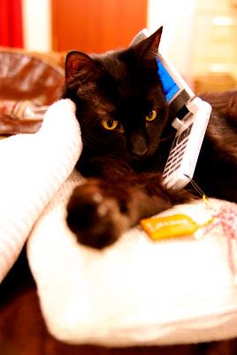 猫カフェ 猫のいる休憩所299