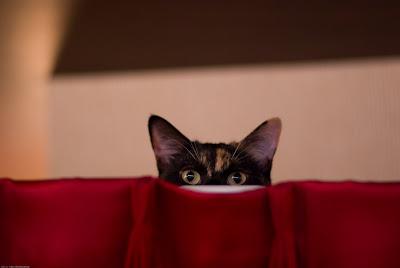 猫カフェ 猫の居る休憩所299
