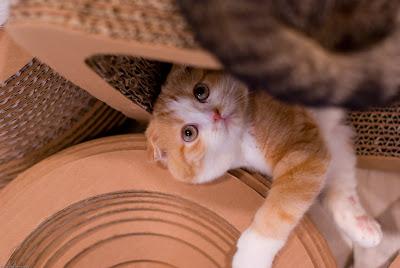 猫カフェ curl up cafe