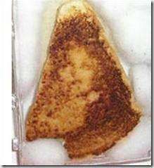Roti-Diane-Duyser jpg