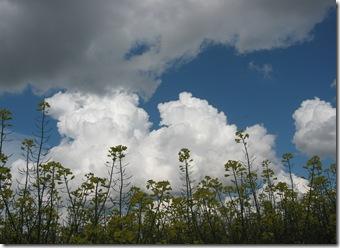 Ciel de nuages 2