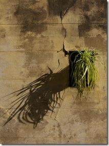 Plante & ombre