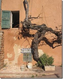 Mur Vigne Roussillon