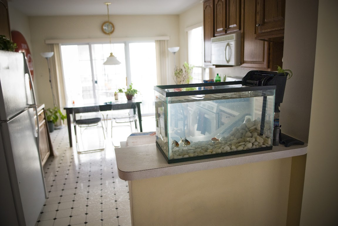 Fish tank in kitchen - My Mini Koi Aquarium Jeff