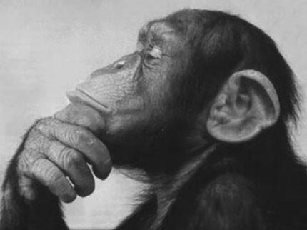 Monkey thinker