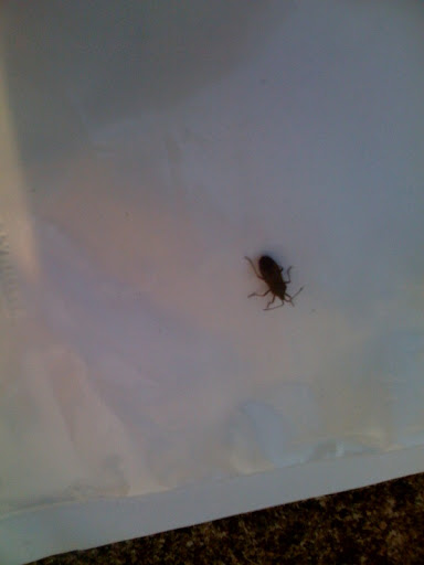 Another bug ID request (two, actually) Photo-770049