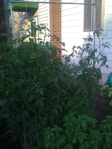 Trellis on more than one side Photo%203-710721