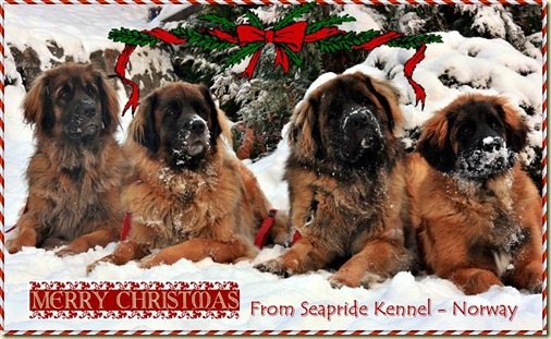 Christmas card 2010