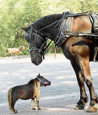 kuda-mini