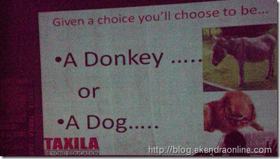 A donkey or a Dog, what do you want to be?