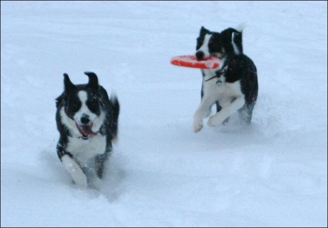frisbee11