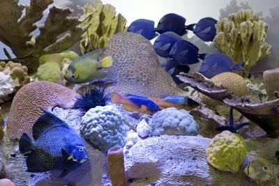 Riff by Naturkundemuseum Berlin