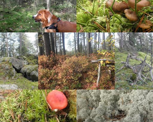 2010-10-19.jpg