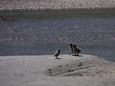 gulls400-4.jpg