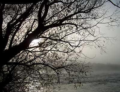 clutha-mist.jpg