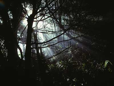 Shafts Of Light. Bush with light-shafts in