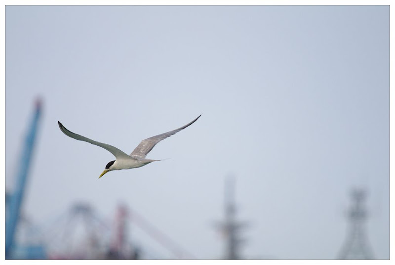 港邊A小鳥與大鳥