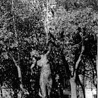 Русалка - скульптура фонтана в Аркасовском сквере