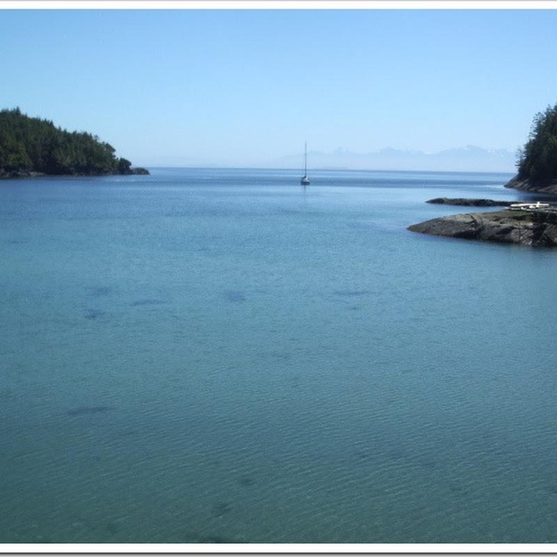 Logbook: Lewis Cove