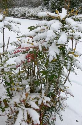 neige neruda 6-1-2010 009