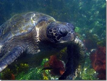 Isabela Snorkeling9 [800x600]