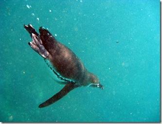 Isabela Snorkeling35 [800x600]